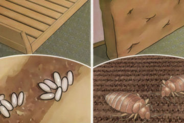Your Bed Is Filled with Lung-Harming Bugs: Here Is How to Kill them Quickly & Naturally