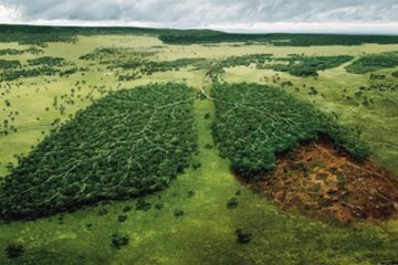 Norway: First Country that Bans Deforestation