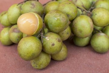 Cure Insomnia & Improve Brain Performance: Quenepa- an Amazing Fruit