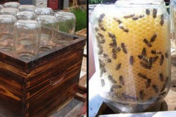 Amazing Story: A Man Invents a Homemade Beehive to Save the Bees!