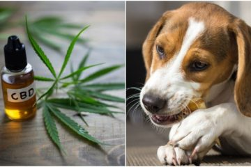 9 Great Reasons You Should Give CBD to Your Pet