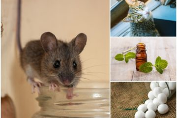 How to Get Rid of Mice Easily: 5 DIY Tricks that actually Work