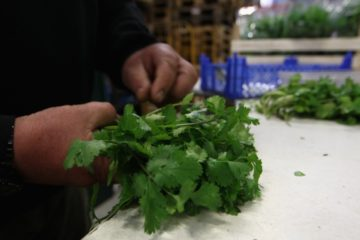 Cilantro Successfully Removes Lead, Mercury & Arsenic from the Body, Scientists Claim