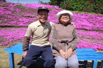 Husband Plants Flower Fields for Blind Wife to Enjoy the Smell- so Amazing It Gets Visited Regularly