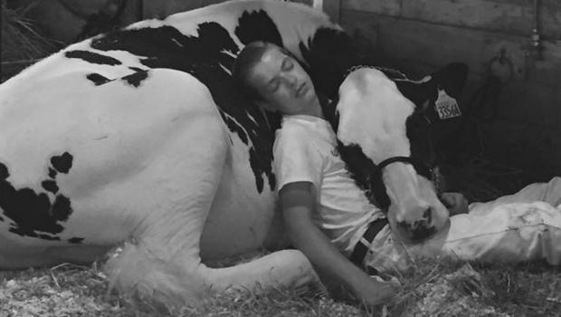 Tired Boy & His Cow Fall Asleep on a Farm & Win over the Internet