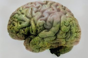 Cannabis may Better Memory in Alzheimer's by Removing Alzheimer Proteins from the Brain