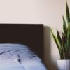 Place a Snake Plant in Your Bedroom to Help with Insomnia, Asthma & Pet Allergies