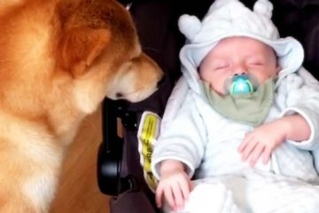 It Will Make Your Day: Dog Has the Cutest Reaction to His Humans Bringing their Newborn Home