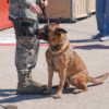 You Can Now Adopt Retired Military Dogs at Joint Base San Antonio-Lackland