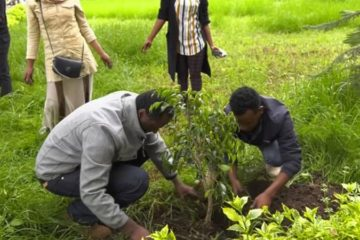 Ethiopia Plant 350 Million Trees & Break World Record