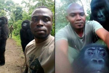 Best Selfie Ever: Gorillas Pose with DR Congo Anti-Poaching Unit