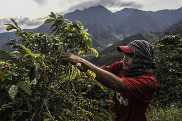 Coffee May Become Extinct by 2080: Climate Change Could Eradicate the all-Time Favorite Drink