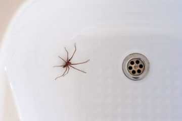 Oh, No: 'Don't Kill the Spiders in Your Home' Says an Entomologist