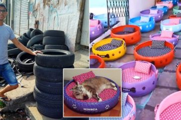 Beautiful Humans: Artist from Brazil Makes Beds for Animals from Old Tires
