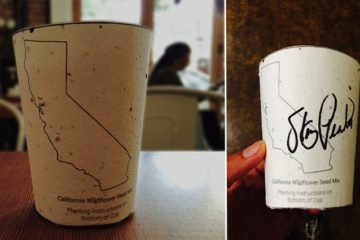 Biodegradable Coffee Cups Embedded with Seeds Grow into Trees when Discarded