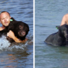 Beautiful People: Brave Man Manages to Save a Drowning 400-Lb Bear