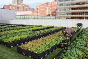 Hospital in Boston Has a Rooftop Garden Supplying more than 7000 Pounds of Organic Produce for Its Patients