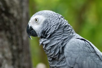 Parrot Comes Back to Owner 4 Years after Disappearing & Speaks Spanish