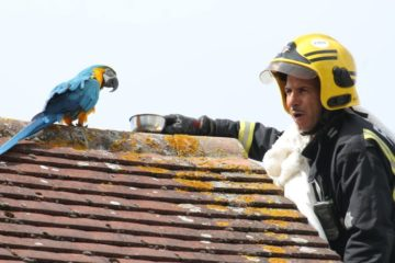Parrot Stuck on a Roof for 3 Days Was Telling Firefighters Trying to Rescue Him to 'F*** Off'