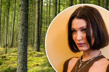 Popular Model Bella Hadid Vows Planting Trees to Reduce Carbon Footprint because of Her Travels