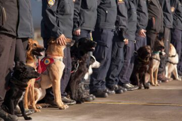Meet the Rescue Dogs Sent from Croatia to Help Victims from Albanian Earthquake