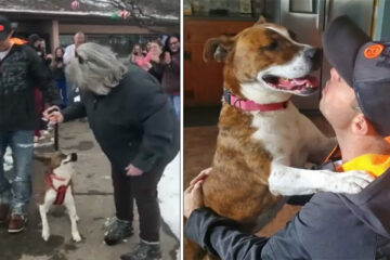 Rescue Dog Can't Contain Joy when She Gets Adopted after 500 Days in a Shelter
