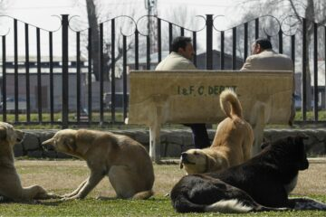 The Netherlands Becomes the First Country without Stray Dogs