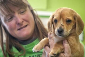 Narwhal, the 'Unicorn' Puppy & Internet Sensation has been Adopted & has a Forever Home