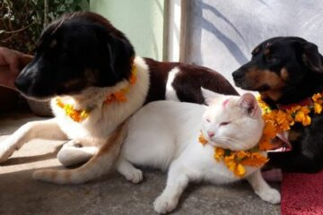 This Annual Nepal Festival Celebrates the Unique & Sacred Bond between Humans & Dogs