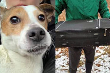Lucky to Be Alive: This Poor Dog Was Dumped at a Park in a Zipped Suitcase