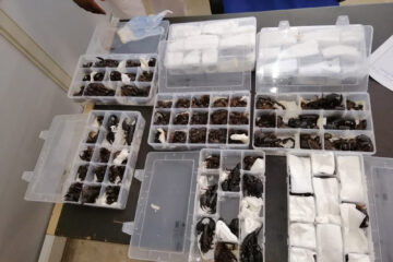 OMG: Man Caught Trying to Smuggle 200 LIVE Scorpions from Sri Lanka to China
