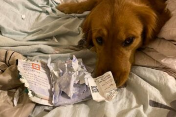 This Dog Chewed Its Owner's Passport & Prevented Her from Travelling to Wuhan