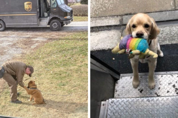 Cutest Thing ever- UPS Drivers Have a FB Group about Dogs They Meet on Routes