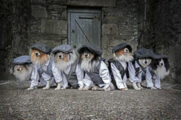 By Order of the Peaky Fluffers: Good Dogs Pose for a Charity Calendar