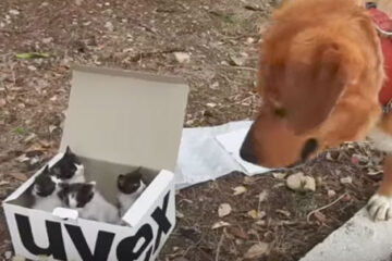 This Rescue Dog Saves a Litter of Kittens & Becomes their 'Stepdad'