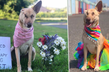 Beautiful Soul: Pregnant Dog Survives Being Shot 17 Times & Is now a Certified Therapy Dog