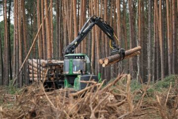 Tesla Gets a Court Order to Stop Cutting Down Trees at a Site of the 1st European Gigafactory