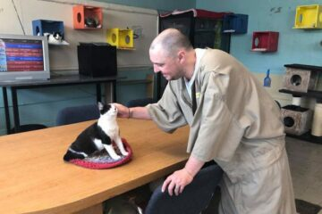 This Prison in Indiana Takes in Shelter Cats- They Have Transformed Prisoners' Lives