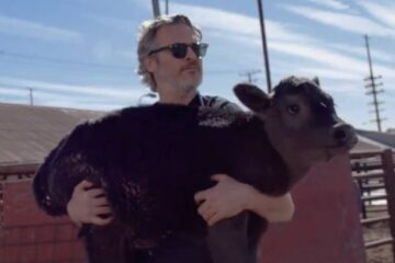 Joaquin Phoenix Rescued a Newborn Calf & a Cow from a Meat Processing Facility in Pico Rivera