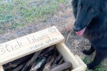 A Man from New Zealand Builds the Best Dog Library: Instead of Books, the Library Has Sticks