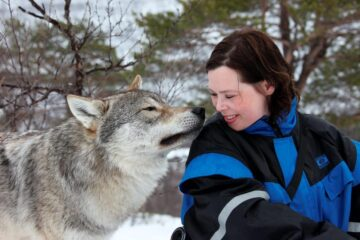 There Is a Park in Norway that Allows Visitors to Play with Wolves under the Northern Lights