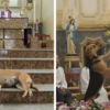Wonderful People: A Brazilian Priest Brings in Stray Dogs to Sunday Mass to Help Find Them Forever Homes