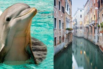 During Italian Lockdown due to COVID-19, Swans & Dolphins Appear in Venice Canals