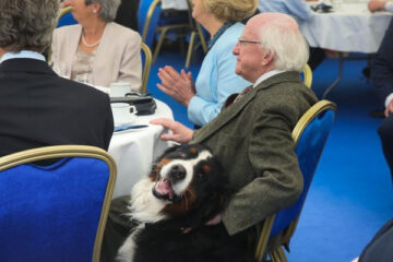 Isn't This the Cutest Thing ever? The Giant Bernese Dog of the Irish President 'Refuses' to Leave until He Gets a Belly Rub