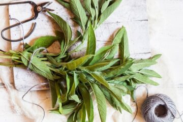 Don't Miss Out on Sage, a Wonderful Herb: Here Are Its 6 Best Health Benefits
