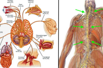 7 Ways to Stimulate Your Vagus Nerve & Fight Off Inflammation, Depression & Migraines