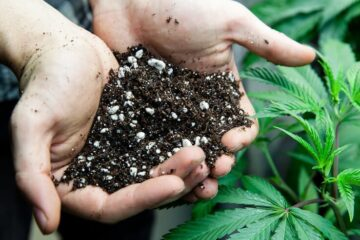Cannabis Is Effective At Removing Nuclear Radiation and Heavy Metals From Contaminated Soil