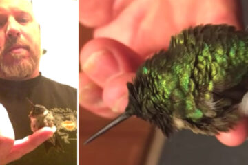 Every Year, this Hummingbird Comes Back to the Man Who Saved It