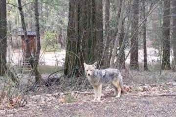 Video Shows Yosemite National Park Full of Animals in the Absence of Humans