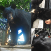 Father-Son Duo Kills Hibernating Mother Bear And Two Cubs, Proudly Pose For Pictures